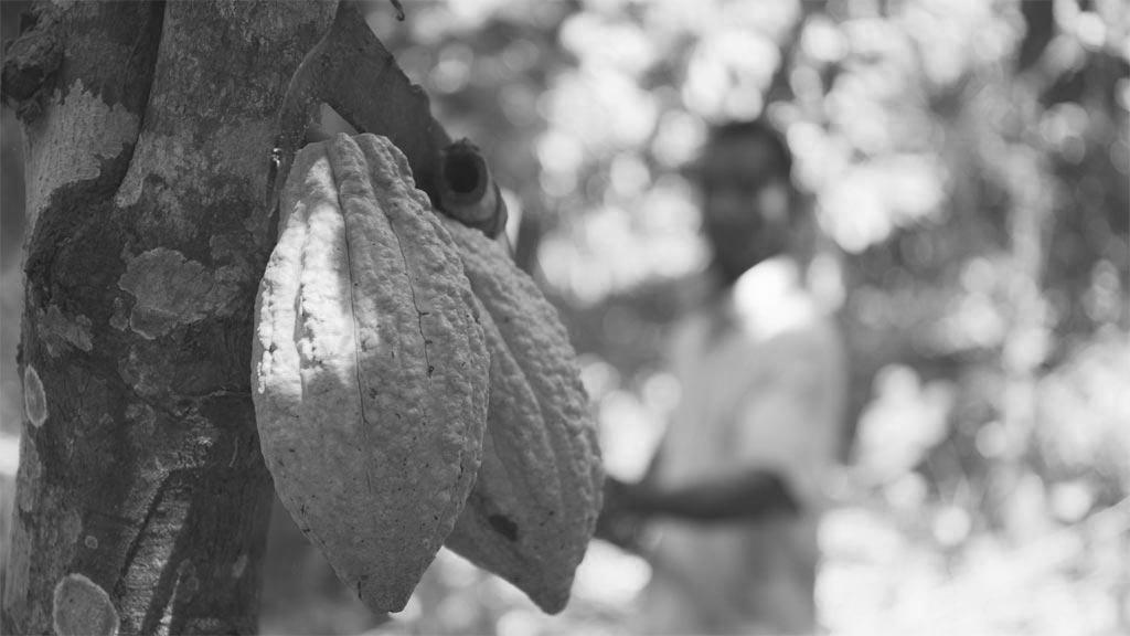 Cocoa in Ghana Documetary