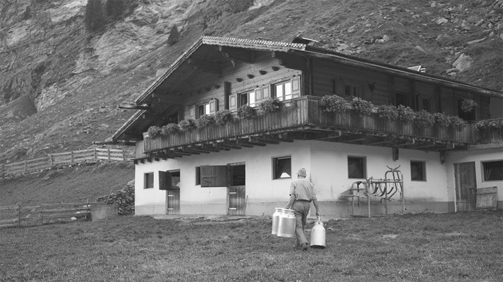 Tiroler Graukühe Video